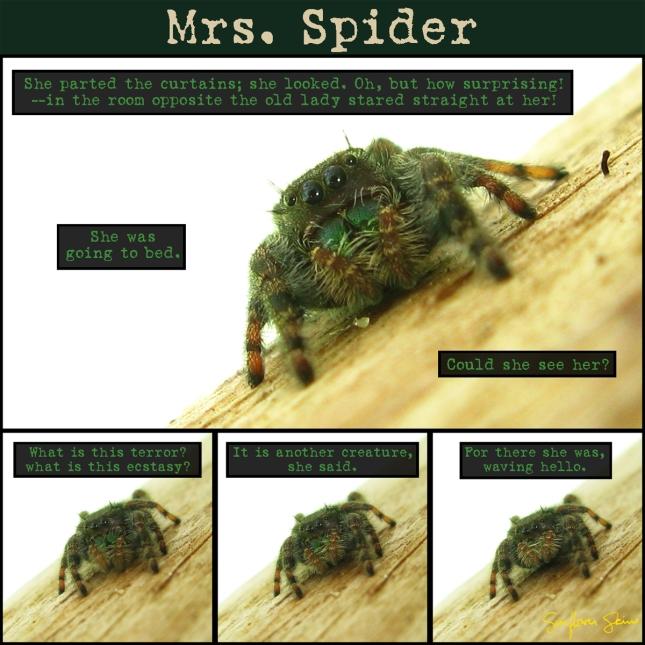 Mrs.Spider